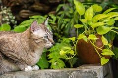 Schöne Katze draußen Lizenzfreies Stockfoto