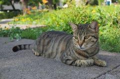 Schöne Katze fotografiert von einem nahen Abstand stockfotografie