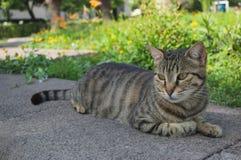 Schöne Katze fotografiert von einem nahen Abstand lizenzfreie stockfotos