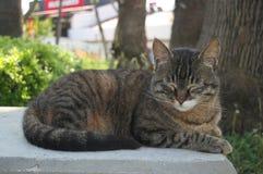 Schöne Katze fotografiert von einem nahen Abstand lizenzfreie stockfotografie