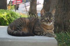 Schöne Katze fotografiert von einem nahen Abstand lizenzfreies stockfoto