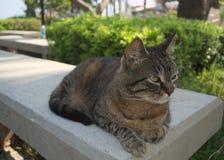 Schöne Katze fotografiert von einem nahen Abstand lizenzfreie stockbilder