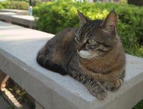 Schöne Katze fotografiert von einem nahen Abstand stockbild