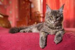 schöne Katze, Haustier lizenzfreies stockbild