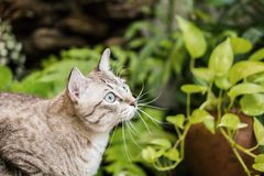 Schöne Katze im Garten Lizenzfreie Stockbilder