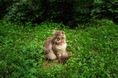 Schöne Katze im Garten lizenzfreie stockfotos