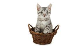Schöne Katze im Korb lokalisiert auf einem Weiß Lizenzfreies Stockfoto