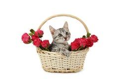 Schöne Katze im Korb mit den Blumen lokalisiert auf einem Weiß Lizenzfreie Stockbilder