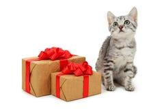Schöne Katze mit der Geschenkbox lokalisiert auf einem Weiß Stockfoto