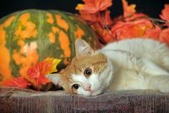 Schöne Katze mit Kürbis und Herbstlaub Stockbilder