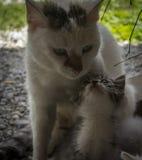 Schöne Katze und kleine Miezekatze Stockbilder