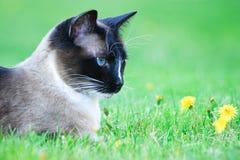 Schöne Katze, welche die Blumen riecht Lizenzfreie Stockfotografie