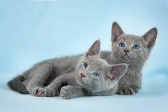 Schöne Katzen Lizenzfreies Stockfoto
