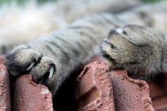 Schöne Katzentatzen und -nägel stockbilder