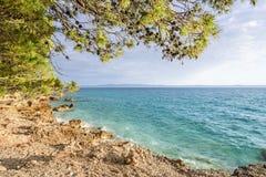 Schöne Kiefer und das Ufer des blauen Meeres am Abend kroatien Lizenzfreies Stockfoto