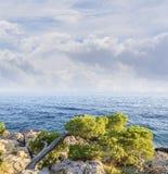 Schöne Kiefer und das Ufer des blauen Meeres am Abend kroatien Stockfoto