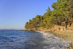 Schöne Kiefer und das Ufer des blauen Meeres am Abend kroatien Lizenzfreies Stockbild