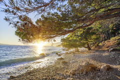 Schöne Kiefer und das Ufer des blauen Meeres am Abend kroatien Lizenzfreie Stockfotografie