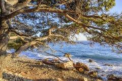 Schöne Kiefer und das Ufer des blauen Meeres am Abend kroatien Lizenzfreie Stockfotos