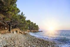 Schöne Kiefer und das Ufer des blauen Meeres am Abend kroatien Stockbilder