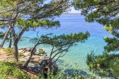 Schöne Kiefer und das Ufer des blauen Meeres kroatien Stockbilder