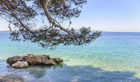 Schöne Kiefer und das Ufer des blauen Meeres kroatien Stockfotografie