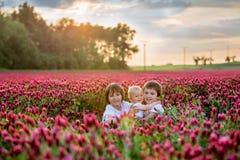 Schöne Kinder auf dem herrlichen Inkarnatkleegebiet auf Sonnenuntergang stockbilder