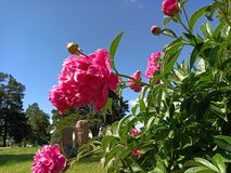 Schöne Kirchhof-Blumen lizenzfreie stockfotografie