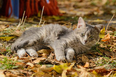 Schöne Kitten Lying Stockbild