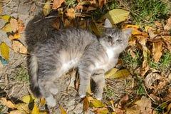 Schöne Kitten Lying lizenzfreies stockfoto