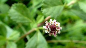 Schöne kleine Blume lizenzfreies stockbild