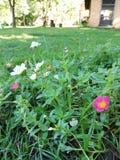 Schöne kleine Blume lizenzfreie stockfotografie