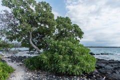 Schöne Kohala-Küstenaussicht auf der großen Insel von Hawaii Stockbilder