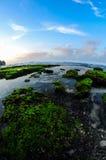 Schöne Korallen Lizenzfreies Stockfoto