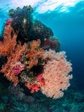 Schöne Korallenriffe, Raja Ampat, Indonesien Lizenzfreies Stockbild