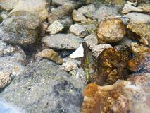 Schöne Kräuselungen auf Fluss fließen über bunte Steine in Sommer stockfotografie