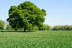 Schöne ländliche Landschaft Lizenzfreie Stockfotografie
