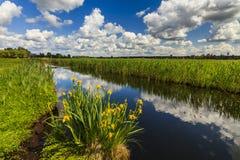 Schöne ländliche Landschaft mit Fluss Lizenzfreie Stockbilder