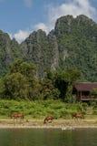 Schöne ländliche Landschaft mit Pferden und Enten entlang der Bank des Nam Song-Flusses nahe Vang Vieng, Laos Lizenzfreie Stockbilder