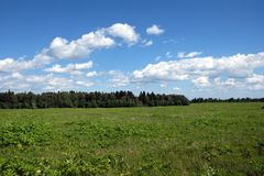 Schöne ländliche Landschaftslandschaft mit grünem Feld, Mischwald und weißen Wolken auf blauem Himmel am Sommertag Lizenzfreies Stockfoto
