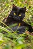 Schöne Lüge der schwarzen Katze und entspannen sich im grünen Gras draußen in der Natur Lizenzfreie Stockbilder