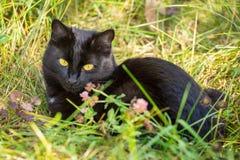 Schöne Lüge der schwarzen Katze und entspannen sich im grünen Gras in der Natur Stockbild