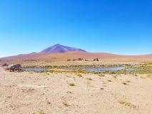 Schöne Lamas in den Anden in Südamerika lizenzfreies stockbild