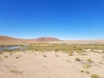 Schöne Lamas in den Anden in Südamerika lizenzfreie stockfotografie