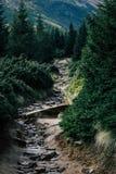 Schöne Landschaft in den Karpatenbergen lizenzfreies stockbild