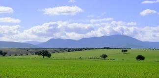 Schöne Landschaft der grünen Weide mit Flussinseleichen Stockfoto