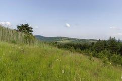 Schöne Landschaft der Sommernatur mit Wald in der Steigung, in der grünen Lichtung und in wohlriechendem Blüte Wildflower, Plana- Lizenzfreie Stockfotografie