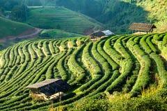 Schöne Landschaft der Teeplantage Lizenzfreie Stockfotografie