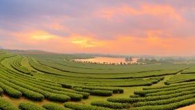 Schöne Landschaft des Ackerlands des grünen Tees morgens mit Dr. Stockfotografie