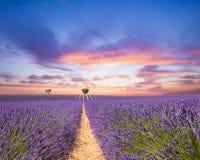Schöne Landschaft des blühenden Lavendelfeldes lizenzfreie stockfotografie